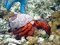 Reef0616 - Flickr - NOAA Photo Library.jpg