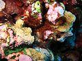 Reef2139 - Flickr - NOAA Photo Library.jpg