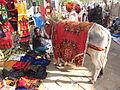 Religious Ox - Gangasagar Fair Transit Camp - Kolkata 2012-01-14 0780.JPG