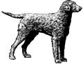 Retriever Dog (PSF).png