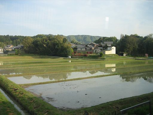 RicePaddyJapan1