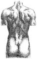 Richer - Anatomie artistique, 1 p. 182.png