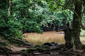 Osun-Osogbo - Image: River Side Shrine And Sacred Grove Of Osun