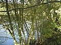 River Derwent - geograph.org.uk - 298031.jpg