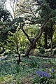Rock Garden at Myddelton House, Enfield, London, England 01.jpg
