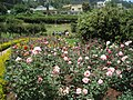 Rose Garden, Ooty - panoramio (2).jpg