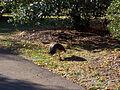 Royal Gardens at Kew (5341281815).jpg