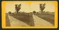 Rural landscape, from Robert N. Dennis collection of stereoscopic views.png
