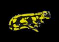 Salamandre.png