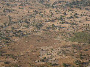 Wildlife of Burkina Faso - Savanna, west of Ougadougou, typical of the majority of the country's landscape.