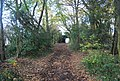 Saxon Shore Way, Beacon Hill Woods - geograph.org.uk - 1606044.jpg