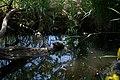 Schildkröte auf Baumstamm Zoologischer Garten Hof 08062019.jpg