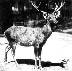 אייל שומבורג בגן החיות של ברלין.1911