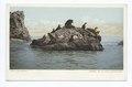 Seal Rocks, Santa Catalina, Calif (NYPL b12647398-62303).tiff