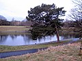 Sefton Park - the boating lake and a tree - geograph.org.uk - 1709055.jpg