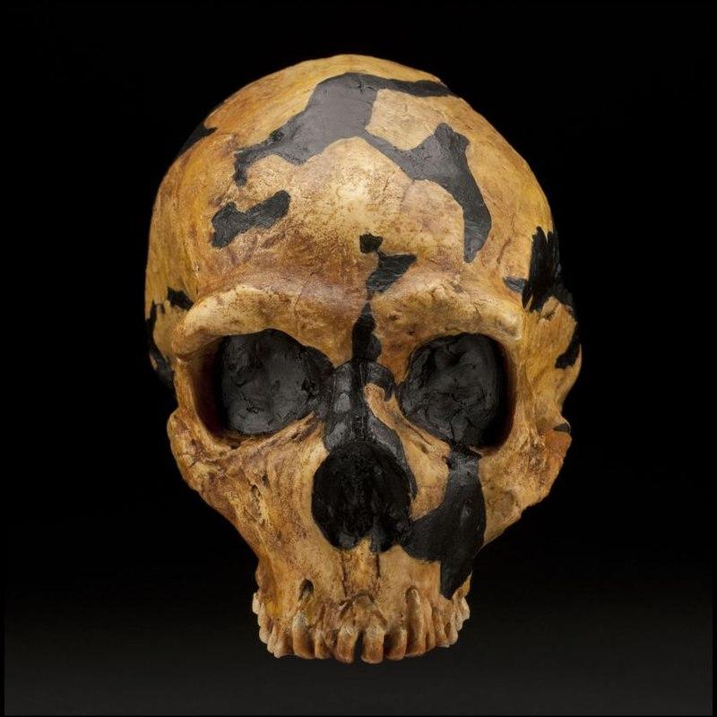 Shanidar skull.jpg