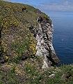 Sheer cliffs at Fowlsheugh RSPB - geograph.org.uk - 1440812.jpg