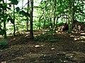 Shelter built in forest - geograph.org.uk - 487858.jpg