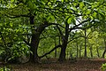 Sherwood Forest, May, 2017-4.jpg