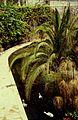 Sicile Syracuse Fontaine Arethuse - panoramio.jpg