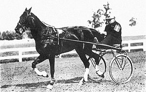 John E. Madden - Champion trotting horse, Siliko in 1906, before winning Kentucky Futurity.