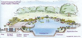 Piscina natural wikipedia la enciclopedia libre for Como construir una piscina natural ecologica