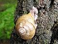 Snail (3714906067).jpg