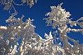 Sninský kameň (v zime) 040.jpg