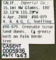 Solenopsis molesta casent0005936 label 1.jpg