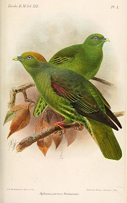 Illustrert av Keulemans, 1893