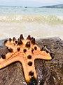 Spiny Starfish.jpg