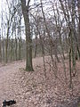 StadwaldFrankfurt Offenbachside IMG 1620.JPG