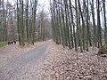 StadwaldFrankfurt Sachenhaeuserlandwehrweg IMG 1762.JPG