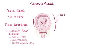 ملف:Stages of labor.webm