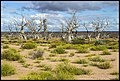 Standing in Dry Lake Menindee NSW-1 (21189830320).jpg