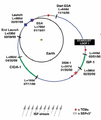 Stardust - loop1.png