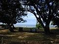 Starr-011104-0002-Cynodon dactylon-beach park-Kalepolepo-Maui (23916370663).jpg