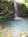 Starr-090702-2029-Costus speciosus-habit and waterfall-Puaa Kaa Park Hana Hwy-Maui (24337750014).jpg