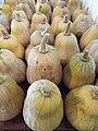 Starr-131002-2352-Cucurbita moschata-harvested fruit-Hawea Pl Olinda-Maui (25227239155).jpg