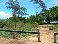 Starr 050703-2661 Vitex rotundifolia.jpg