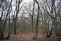 Stubb's Wood - geograph.org.uk - 1759170.jpg