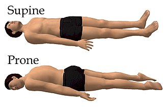 Lying (position) - Supine and prone decubitus.