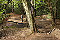 Sutton Park Walk 407.jpg