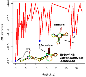 Biomolecular structure - Saccharomyces cerevisiae tRNA-Phe structure space: the energies and structures were calculated using RNAsubopt and the structure distances computed using RNAdistance.