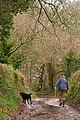 Taking his master for a walk - geograph.org.uk - 1139448.jpg