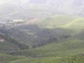 Tea plantations at Munnar.png