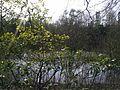 Teich im Wald 4 - panoramio.jpg