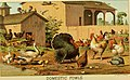 The American farmer's pictorial cyclopedia of live stock (1882) (17501216663).jpg