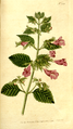 The Botanical Magazine, Plate 208 (Volume 6, 1793).png