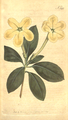 The Botanical Magazine, Plate 393 (Volume 11, 1797).png